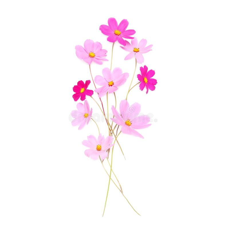 Härliga rosa gulliga blommor som isoleras på en vit bakgrund royaltyfri bild