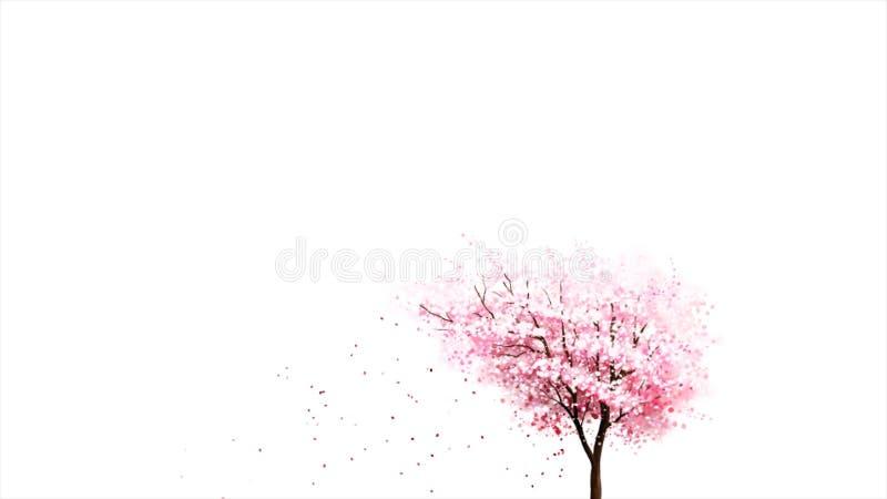 Härliga rosa japanska kronblad för blomning och för blomma sakura för körsbärsrött träd som oavkortade faller på vit bakgrund, sö royaltyfri illustrationer