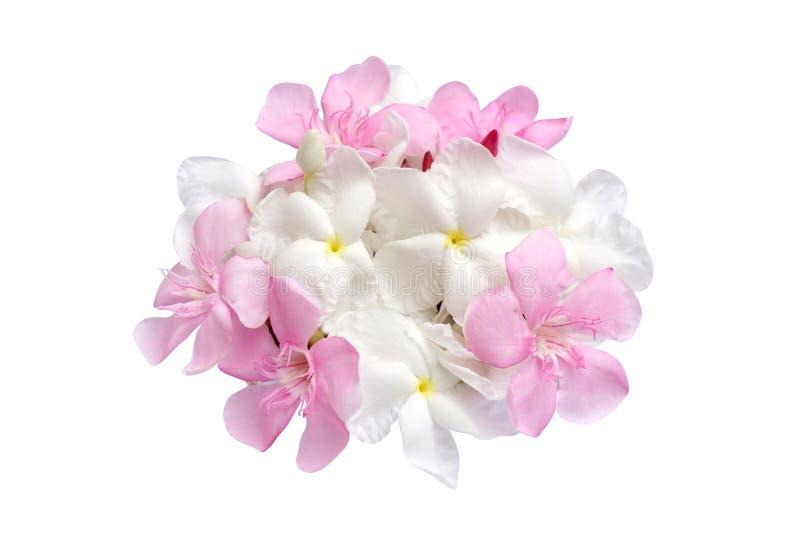 Härliga rosa och vita vårblommor som isoleras på vit bakgrund royaltyfri bild