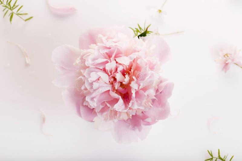 Härliga rosa pionblommor på den vita tabellen med kopieringsutrymme för din sikt och lägenhet för text bästa lägger stil royaltyfria foton