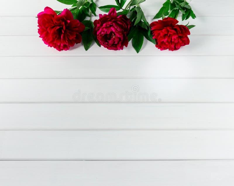 Härliga rosa röda marsalapionblommor på den vita lantliga trätabellen med kopieringsutrymme för din sikt och lägenhet för text bä arkivfoto