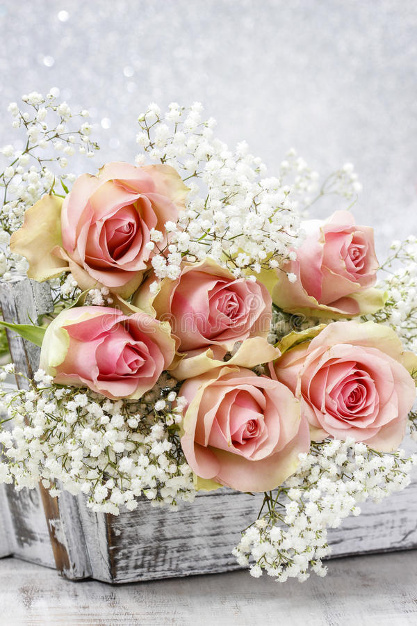 Härliga rosa rosor och Gypsophila (brudslöjablommor) royaltyfri fotografi