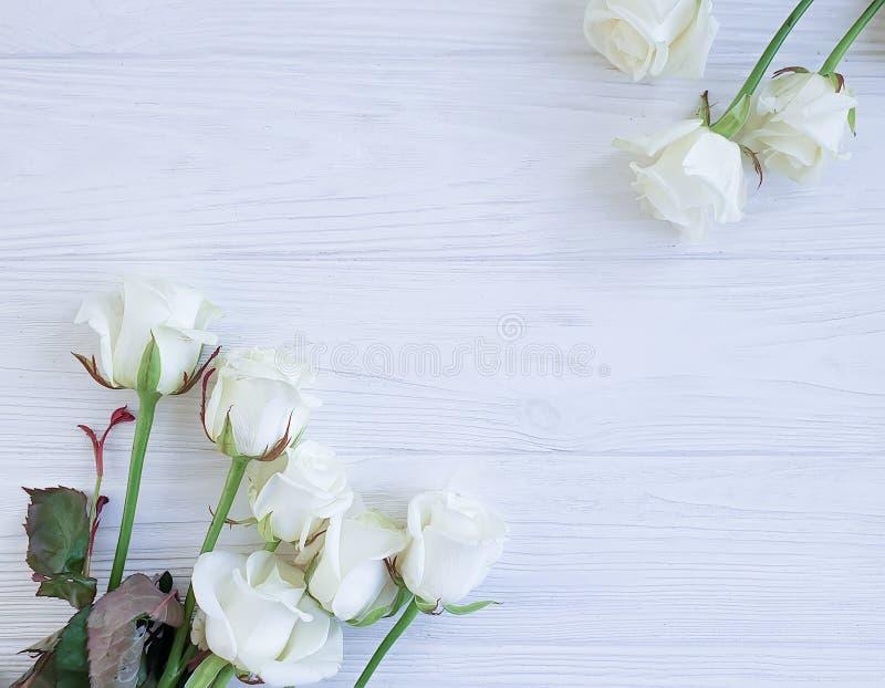 Härliga rosor blomstrar gränsen på den vita träbakgrundsramen royaltyfria bilder