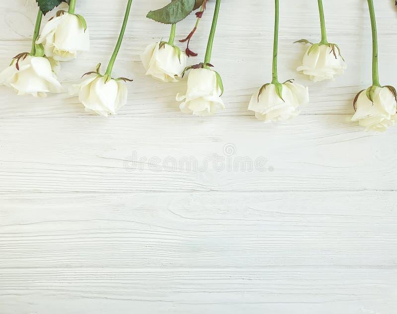 Härliga rosor blomstrar hälsa den romantiska gränsen för sommarberöm på den vita träbakgrundsramen royaltyfri fotografi