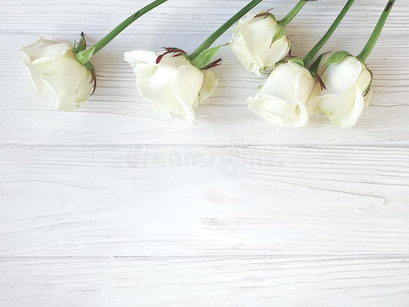 Härliga rosor blomstrar hälsa den romantiska gränsen på den vita träbakgrundsramen royaltyfri foto