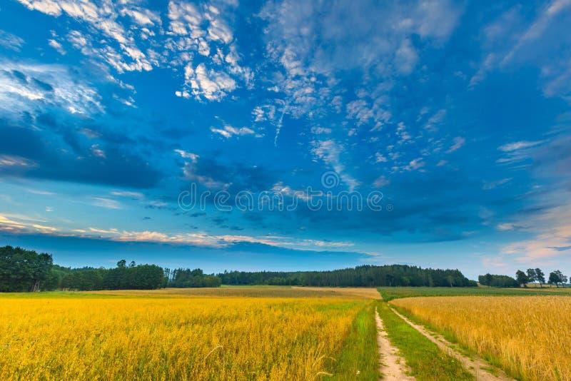 Härliga sädes- fält under molnig himmel på solnedgången fotografering för bildbyråer