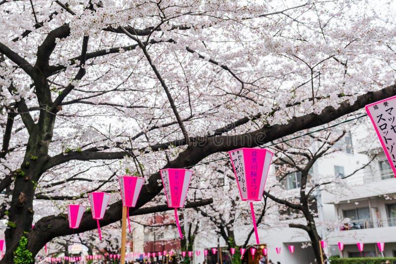 Härliga Sakura, Cherry Blossom blomma med lyktan i den Meguro floden, Tokyo, Japan royaltyfria bilder