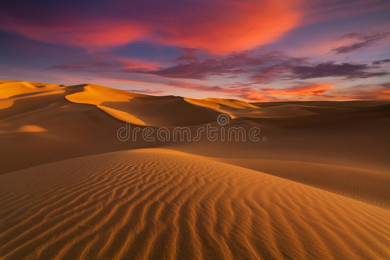 Härliga sanddyn i Sahara Desert royaltyfri bild