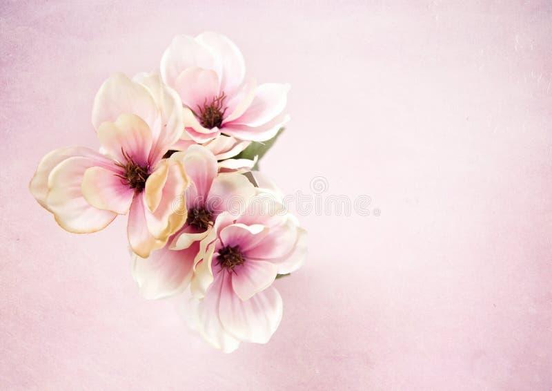 Härliga siden- blommor för vit och för rosa färger arkivbilder