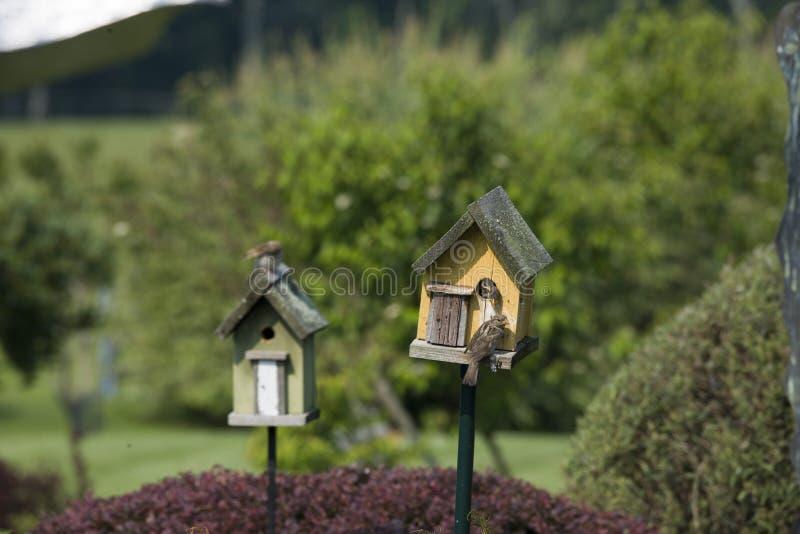 Härliga skott av fåglar i ett fågelhus arkivfoton