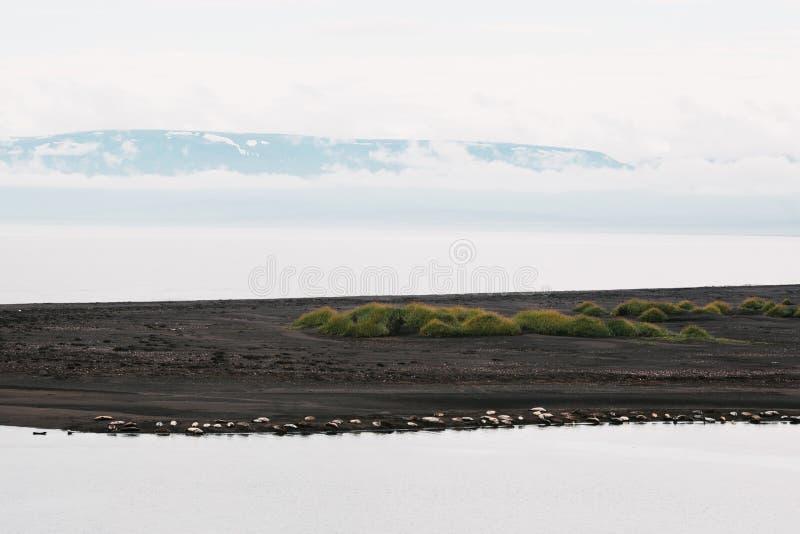 härliga skyddsremsor som ligger på sjösidan royaltyfri foto