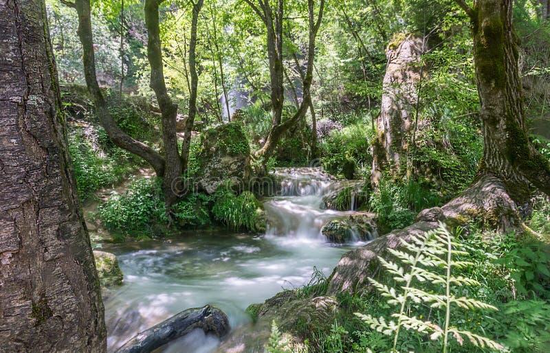 Härliga små vattenfall som sträcker till och med det mest forrest royaltyfri fotografi