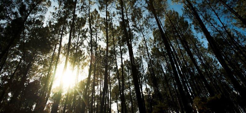 Härliga solstrålar i strandskog, Landes royaltyfria bilder