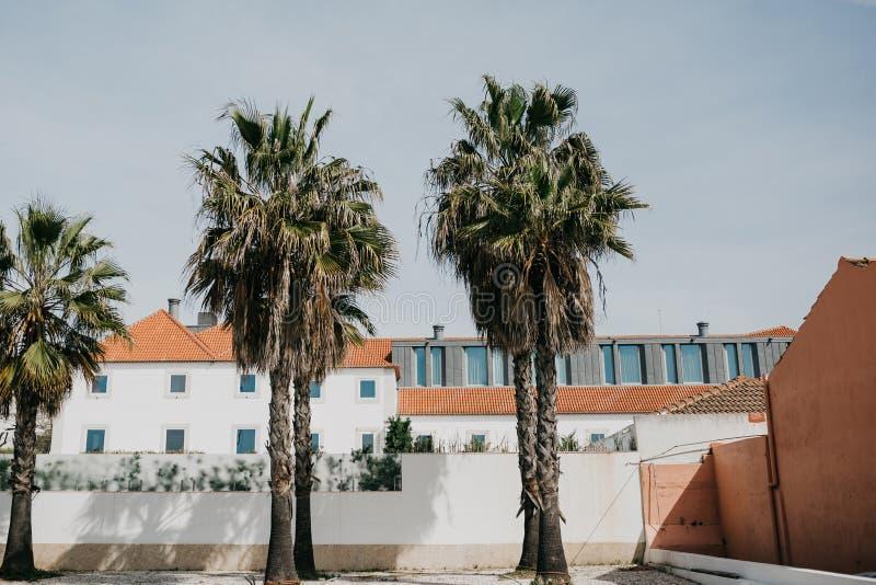 Härliga stads- sikter av palmträd och typiska byggnader bak dem i Lissabon i Portugal royaltyfria bilder