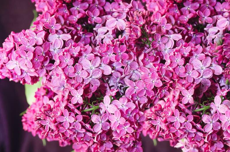 Härliga stora blommor av lilan i små droppar av vatten, färgrik bakgrund closeup selektiv fokus royaltyfri foto