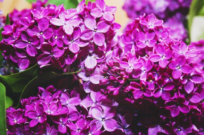 Härliga stora blommor av lilan i små droppar av vatten, färgrik bakgrund closeup selektiv fokus arkivfoto