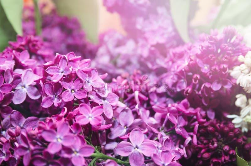 Härliga stora blommor av lilan i små droppar av vatten, färgrik bakgrund closeup selektiv fokus royaltyfri fotografi