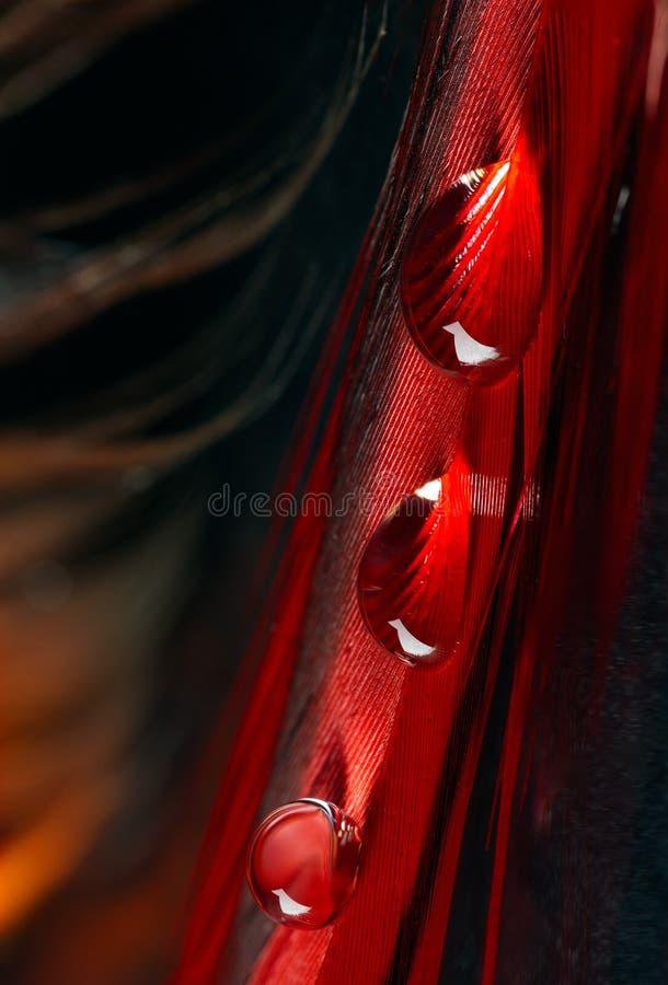 Härliga stora daggdroppar eller regn på hönsfjädercloseupen royaltyfria foton