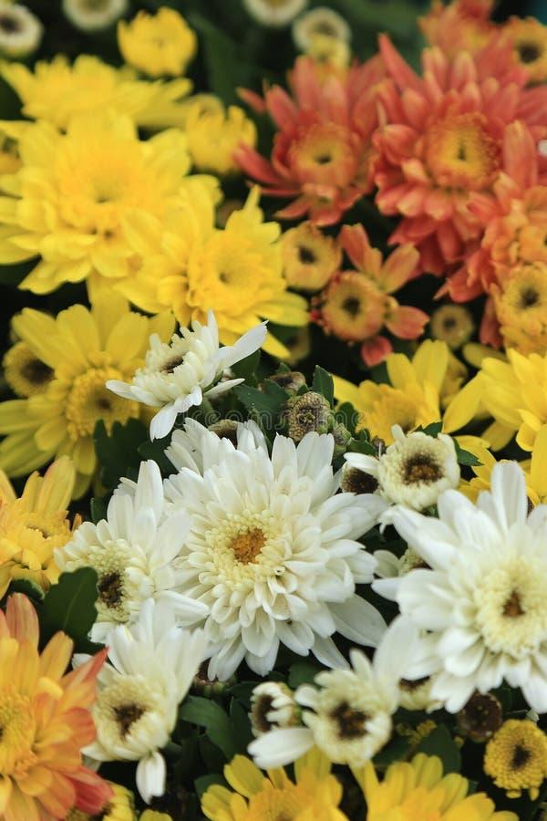 Härliga summerflowers arkivbilder