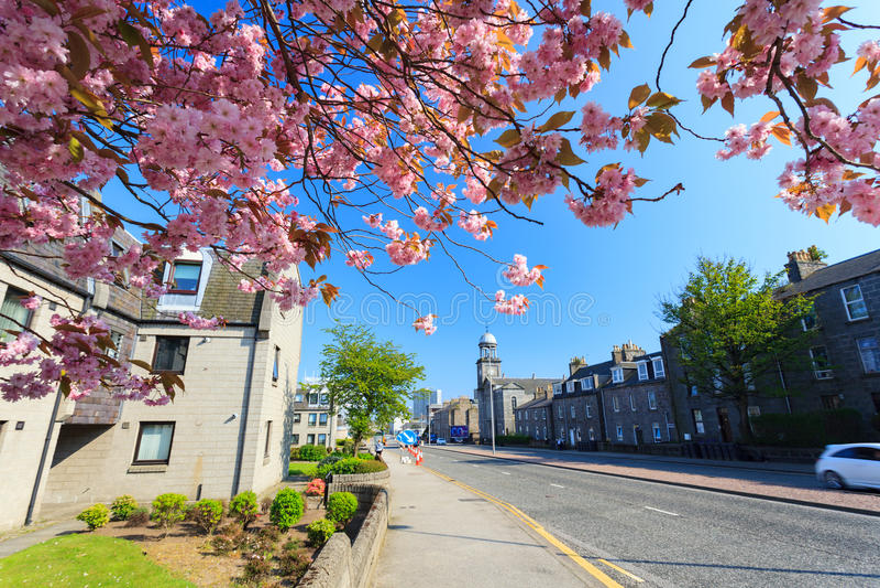 Härliga Sunny Day i den Aberdeen staden med Cherry Blossom royaltyfria foton