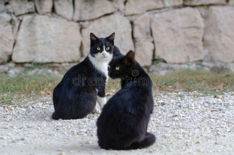 Härliga svarta katter som sitter på gatan royaltyfria bilder