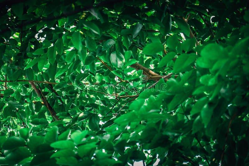 Härliga svartkanter för grönt blad royaltyfri bild