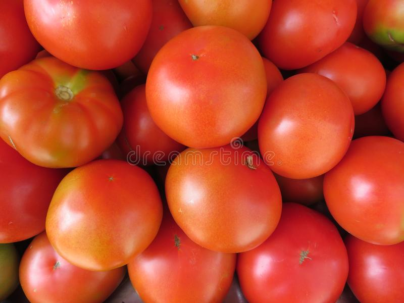 Härliga tomater av trevlig färg och läcker smak arkivbild