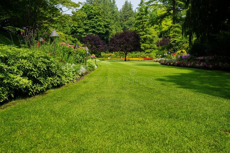 Härliga träd och grönt gräs i trädgård royaltyfria foton