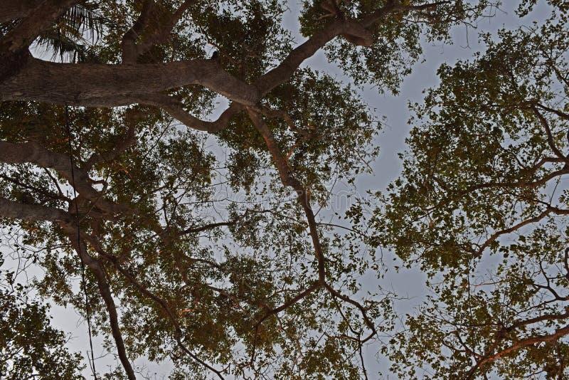 Härliga trädsikter, när du beskådas underifrån royaltyfria bilder