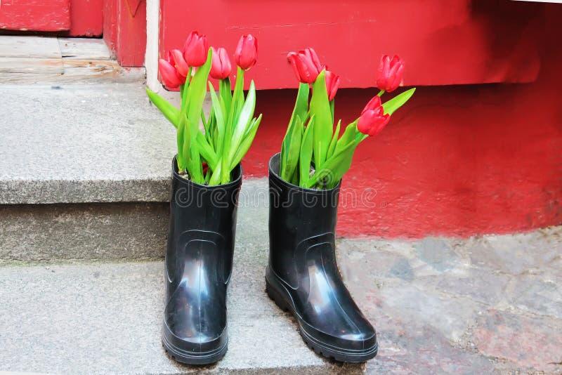 Härliga tulpan blommar i kängor fotografering för bildbyråer