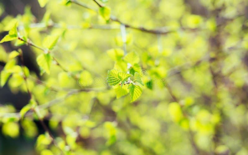 Härliga unga vårgräsplansidor på urblekt suddig bakgrund kopiera avst?nd arkivfoto