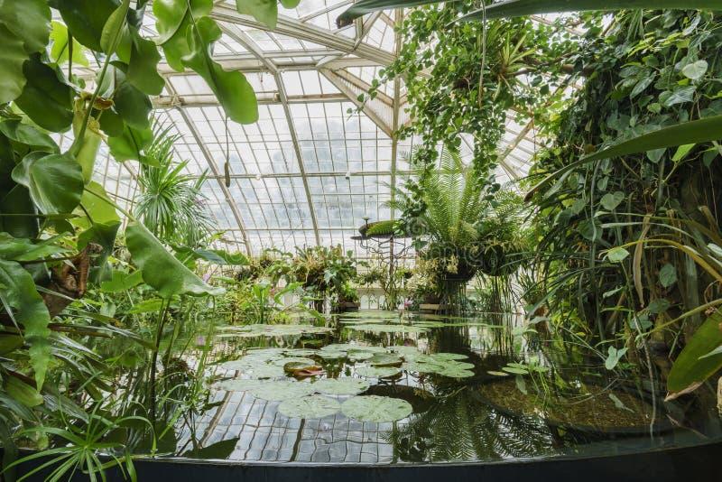 Härliga växter inom växthuset royaltyfria foton