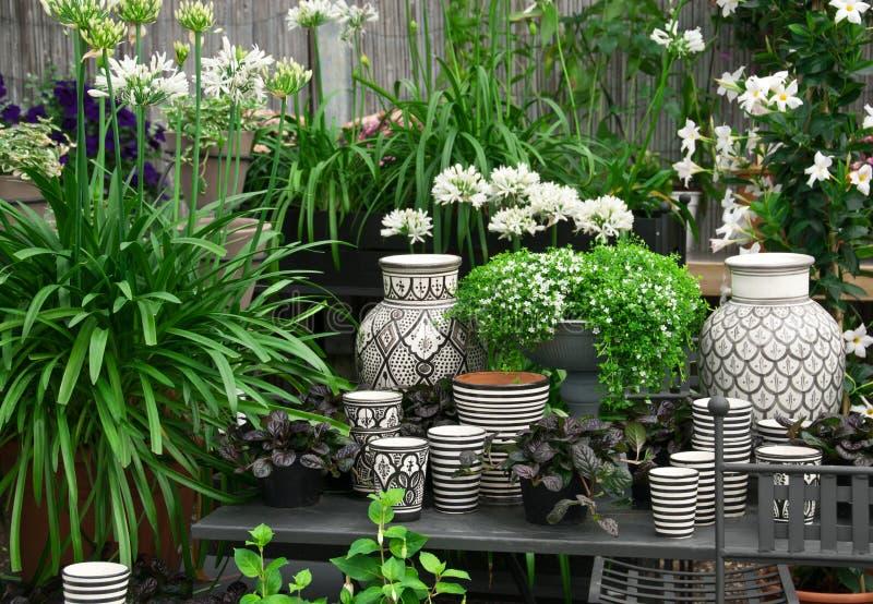 Härliga växter och keramik i en blomsterhandel royaltyfria foton