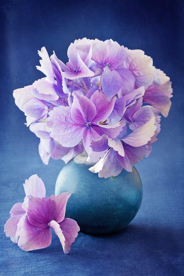 Härliga vanlig hortensiablommor arkivfoto