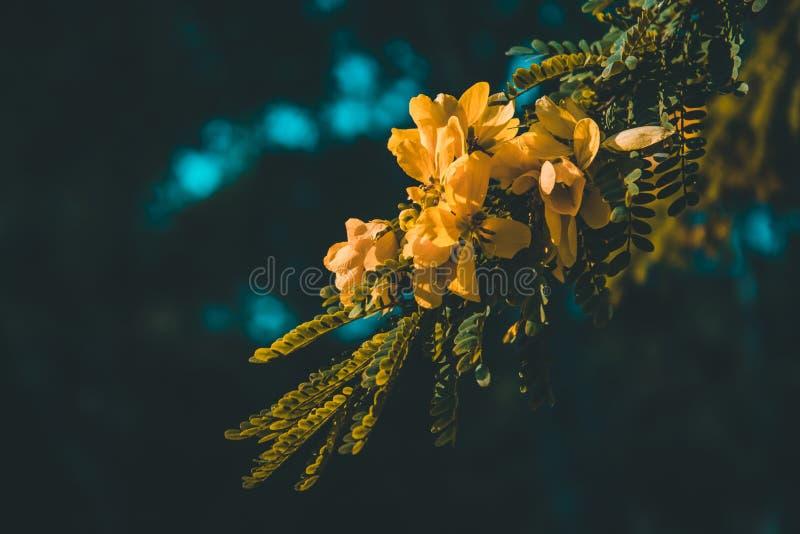 Härliga varma gulingblommor arkivbilder