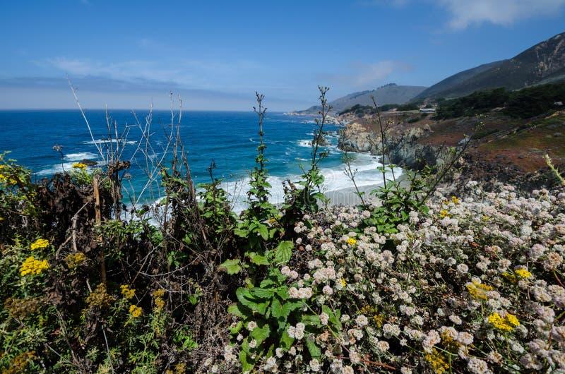 Härliga vildblommor nära Big Sur Kalifornien längs Stillahavskustenhuvudvägen fotografering för bildbyråer