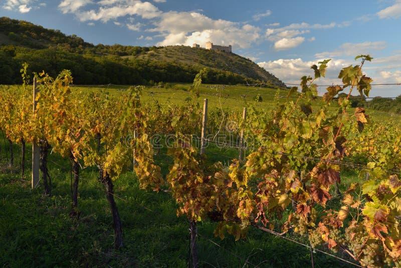Härliga vingårdar i höst fotografering för bildbyråer