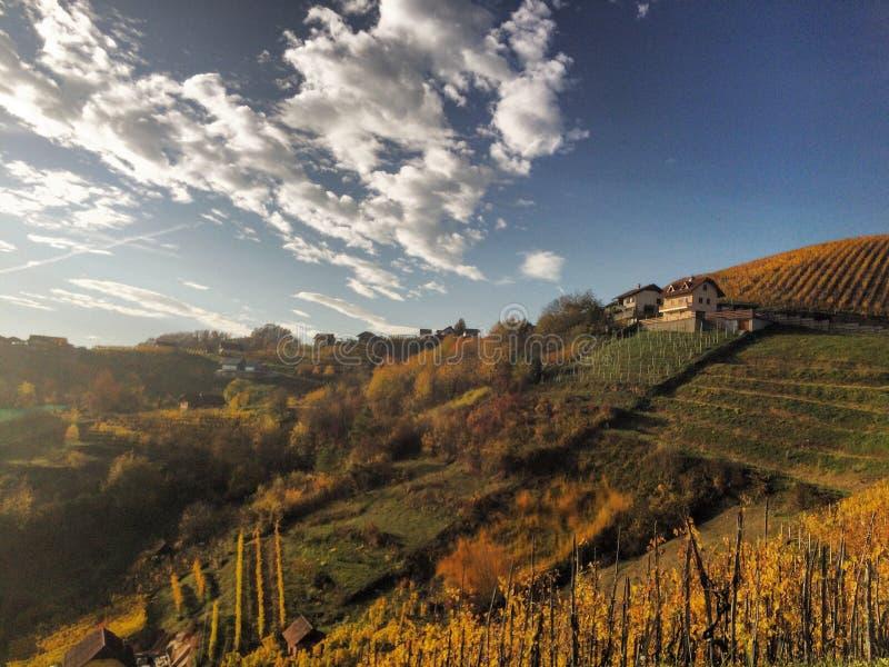 Härliga vingårdar i Slovenien royaltyfri fotografi