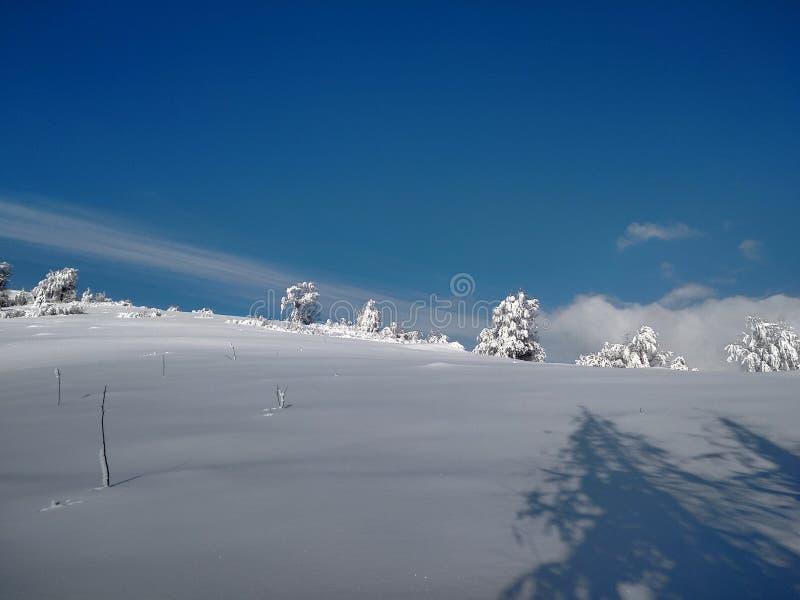 Härliga vinterlandskap med berg och snö-laden träd i byn av Parva, Rumänien, Transylvania royaltyfri foto