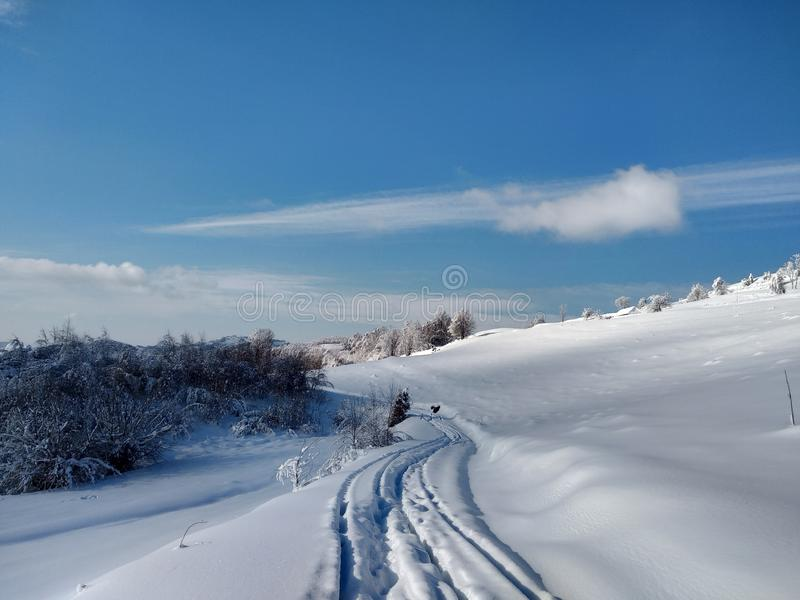 Härliga vinterlandskap med berg och snö-laden träd i byn av Parva, Rumänien, Transylvania royaltyfria bilder