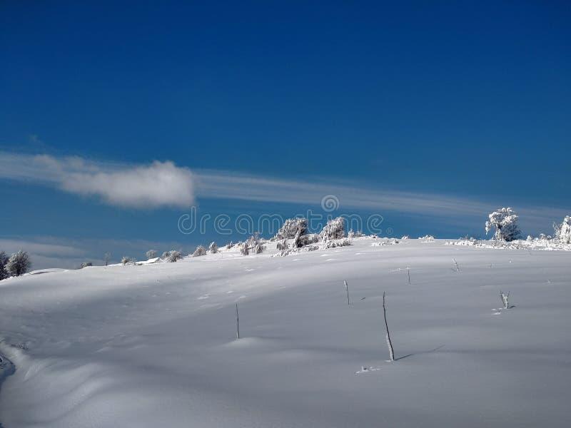 Härliga vinterlandskap med berg och snö-laden träd i byn av Parva, Rumänien, Transylvania arkivbilder
