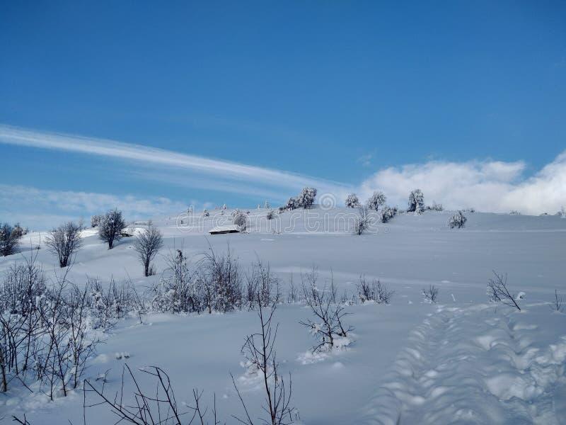 Härliga vinterlandskap med berg och snö-laden träd i byn av Parva, Rumänien, Transylvania arkivfoto