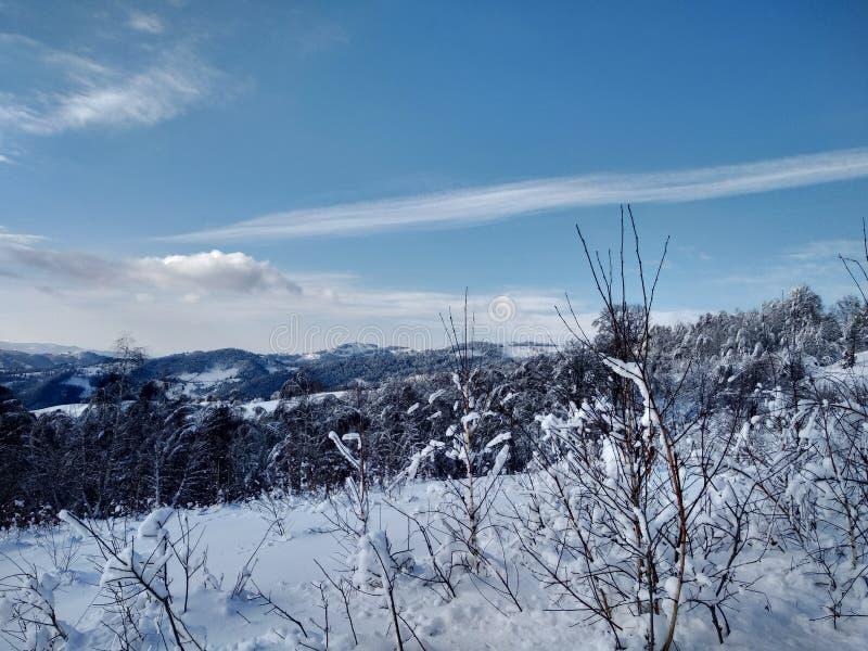 Härliga vinterlandskap med berg och snö-laden träd i byn av Parva, Rumänien, Transylvania royaltyfria foton