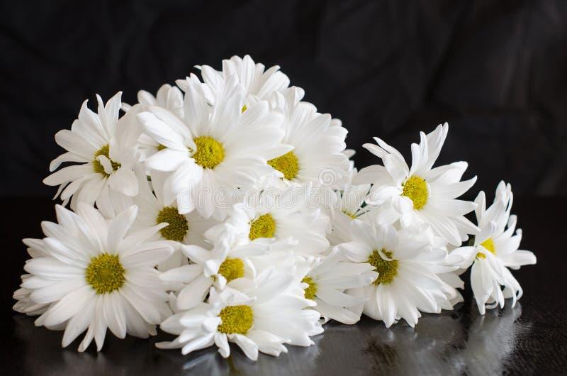 Härliga vita blommor av krysantemumet på svart bakgrund arkivfoton