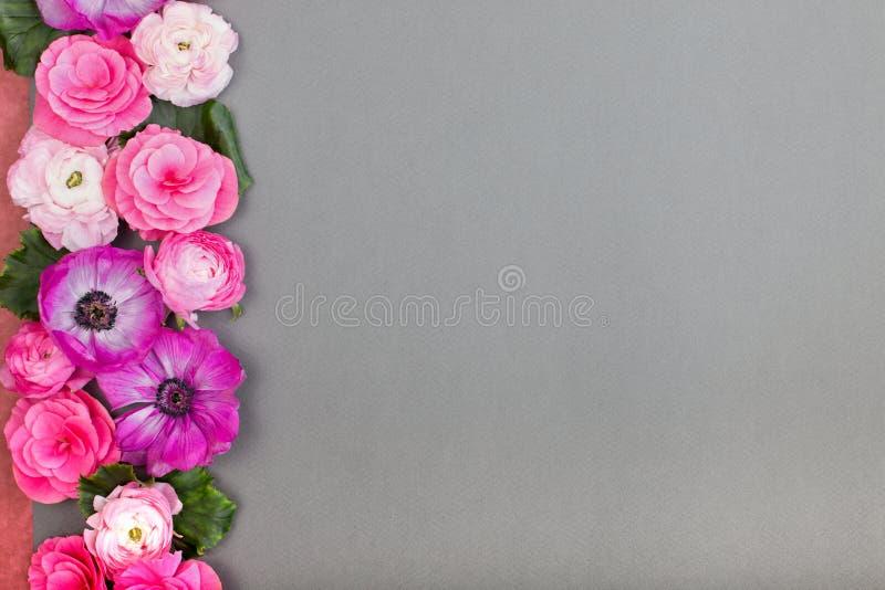 Härliga vita blommor för ros och på grå backgraund blom- kant Pastellfärgad färg Hälsningkort för valentin eller kvinna arkivbilder