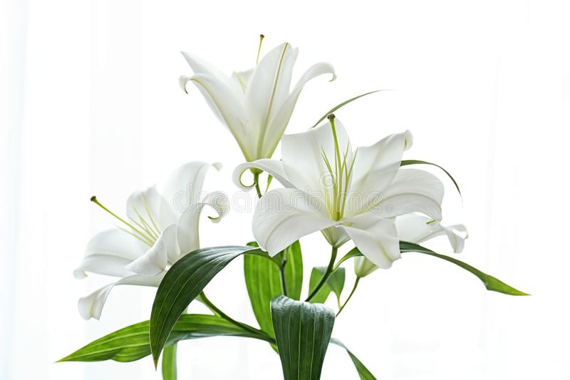 Härliga vita liljor på vit bakgrund arkivfoton