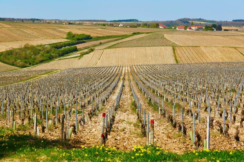 Härliga wineyards i Bourgogne arkivbild