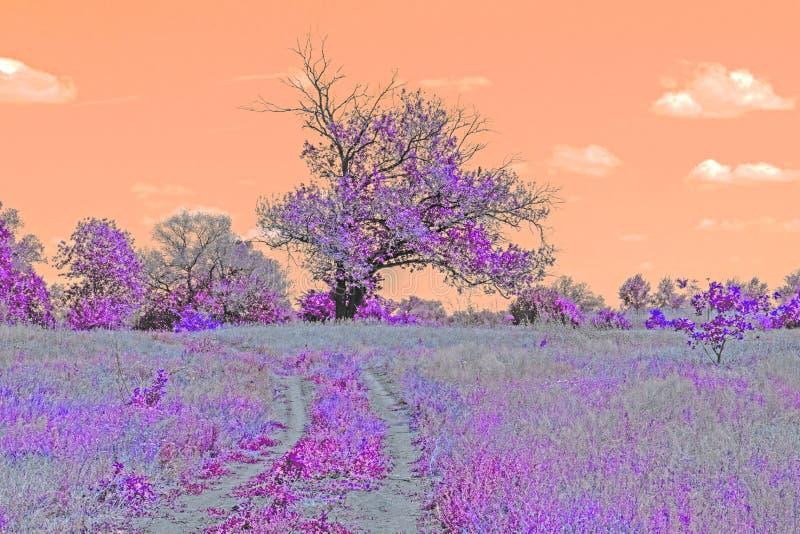 Härligt abstrakt landskap Landsväg till skogen royaltyfri foto