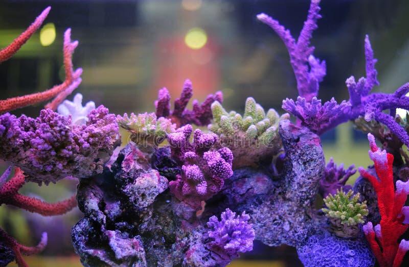 Härligt akvarium. royaltyfria bilder
