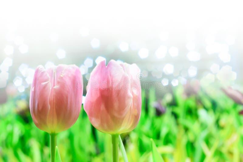 Härligt av färgrik tulpanblommabukett på fält i grön trädgård royaltyfria foton